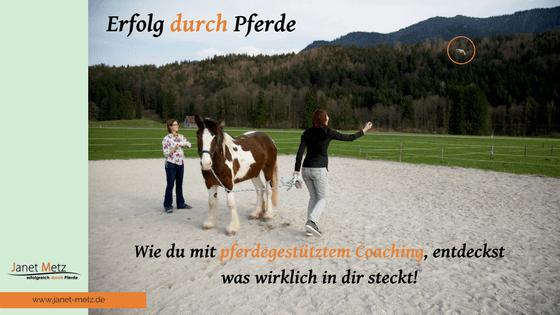 Erfolg durch Pferde