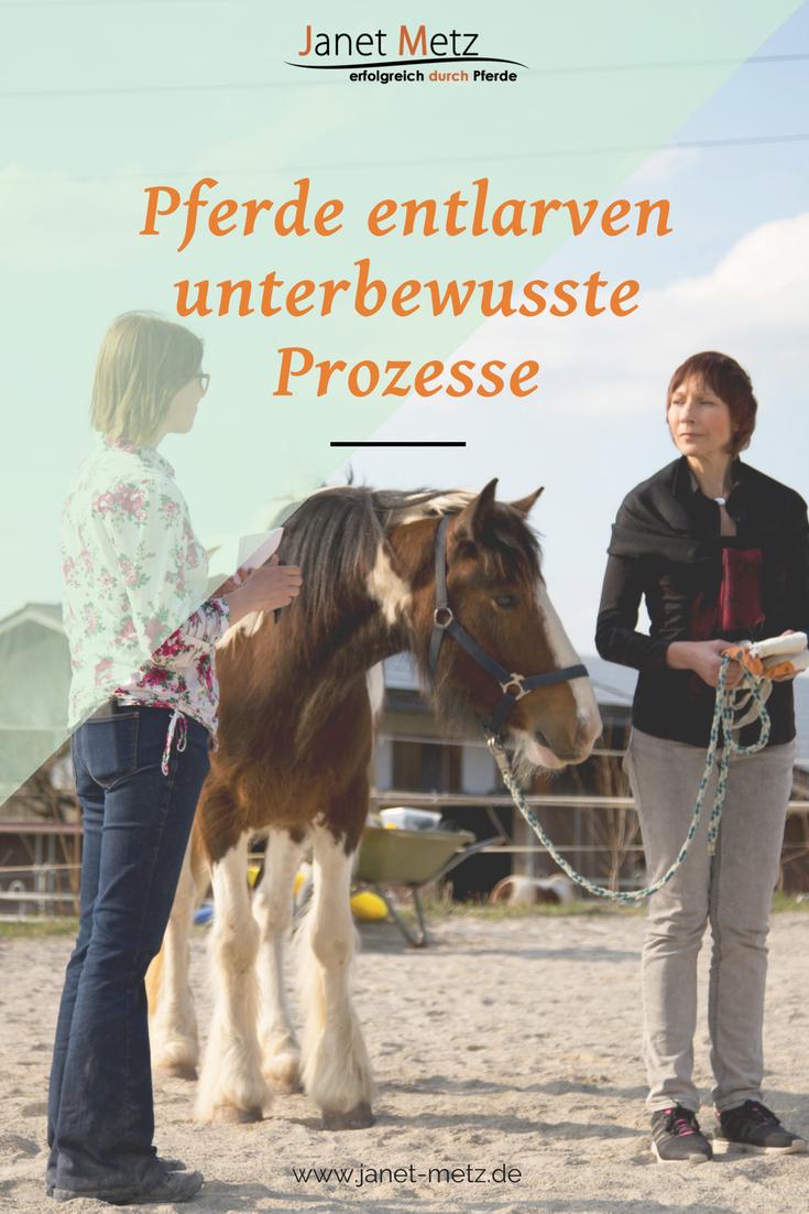 erfolgreich durch Pferde Persönlichkeitstraining