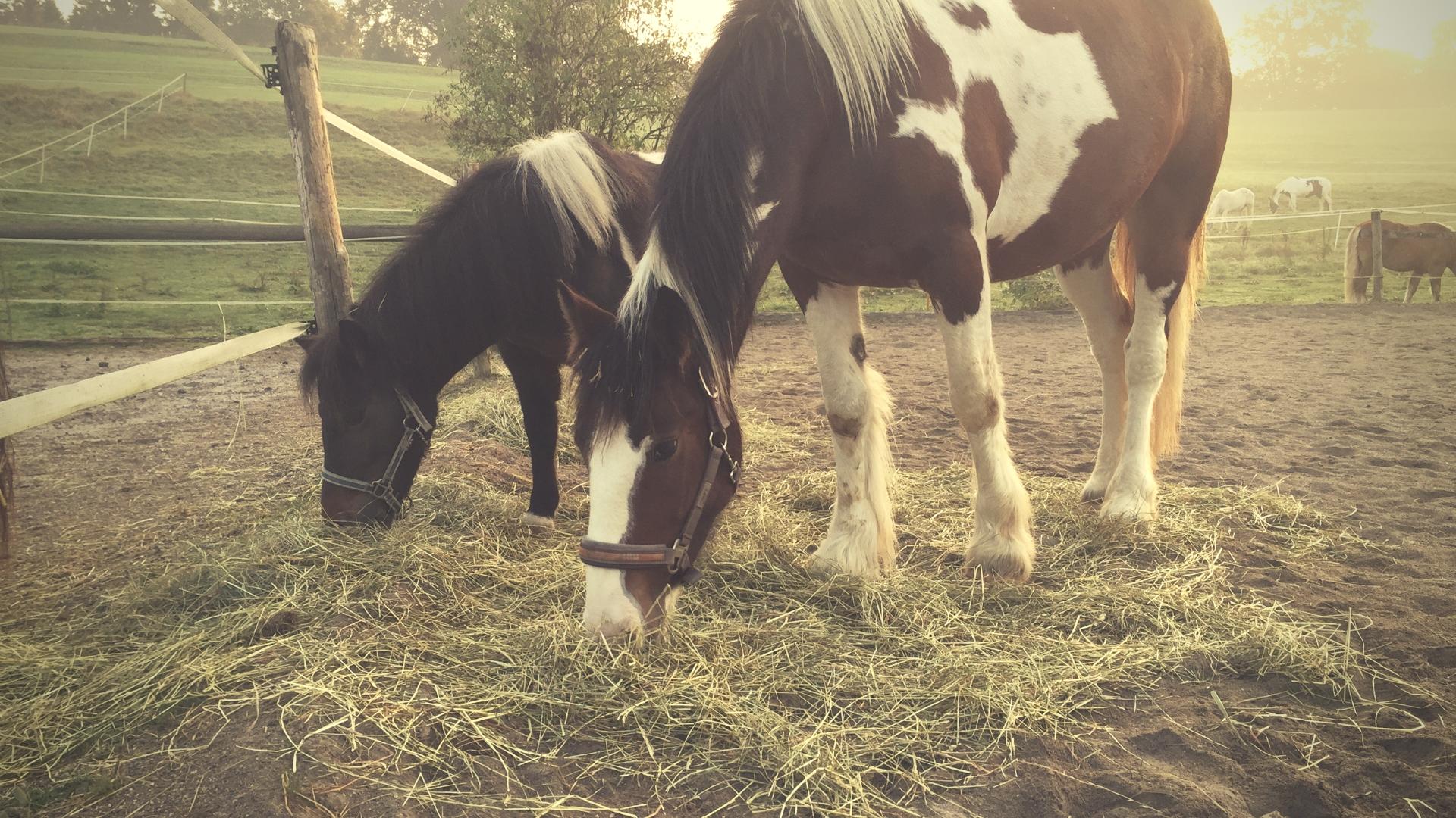 Pony zu dick