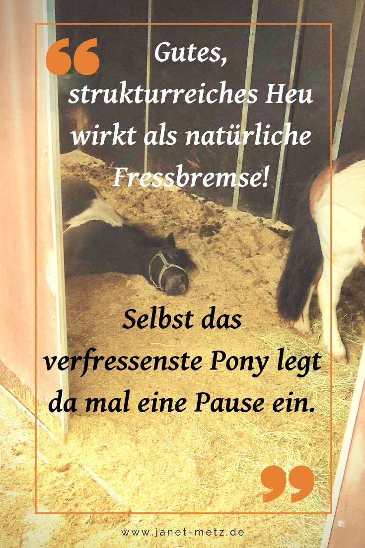 Fütterungsmanagement für das leichtfuttrige Pony. Wie auch dein Pony eine optimale Figur erhält.
