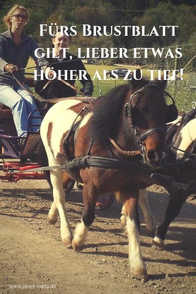 Das Kutschgeschirr Fürs Shetty Janet Metz Pferde Verstehen