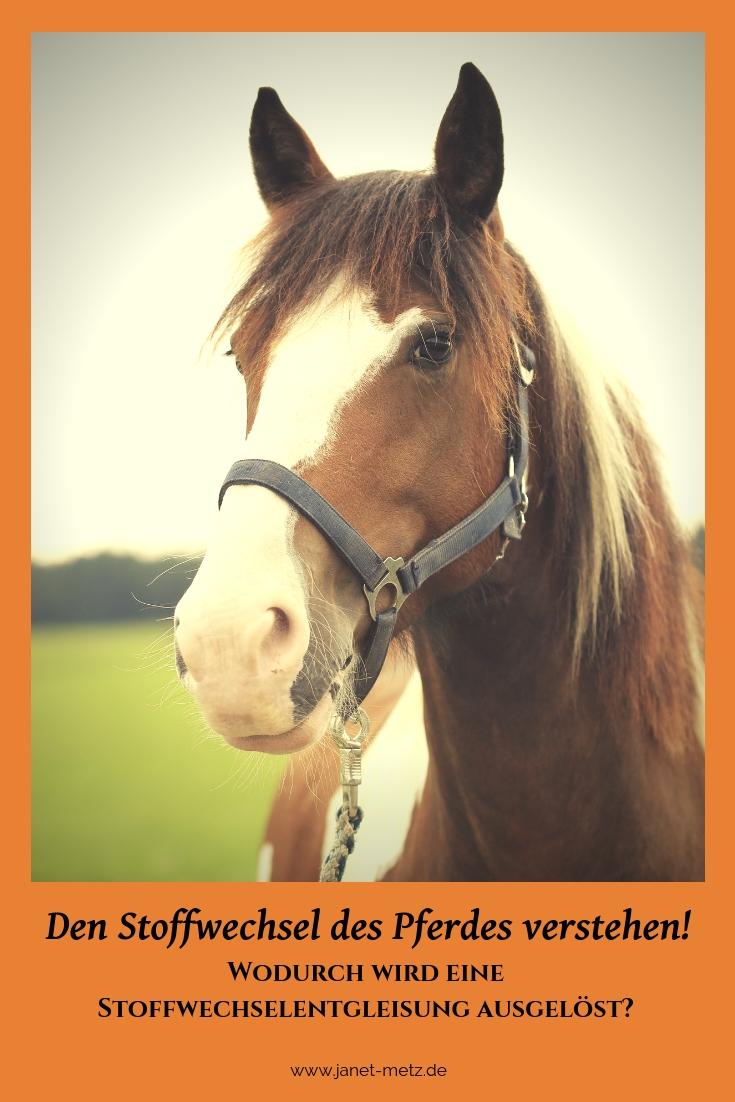 Stoffwechsel Pferd verstehen