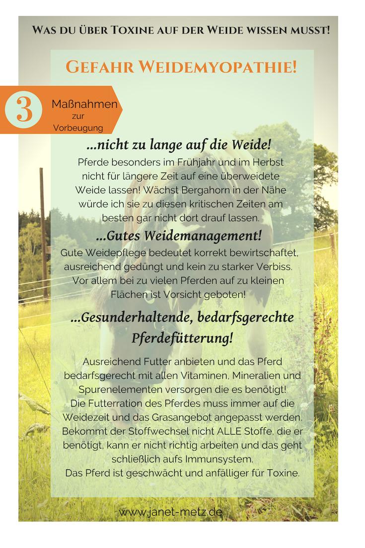 Gefahr Weidemyopathie! Was du über Toxine auf der Weide wissen musst! Weidemyopathie vorbeugen!