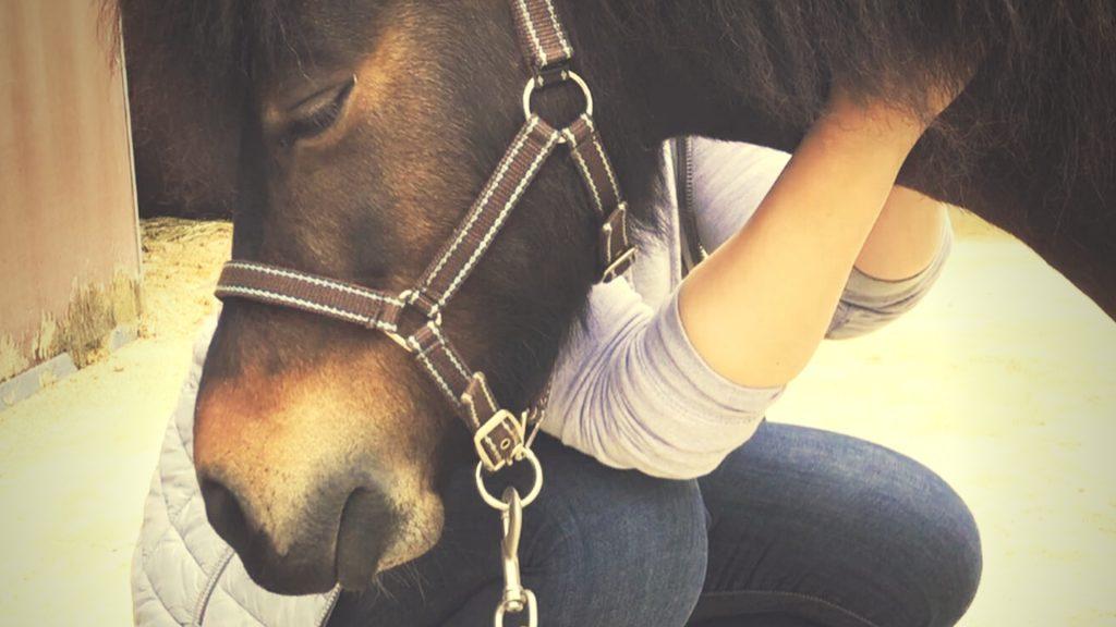 Warum eine osteopathische Behandlung für dein Pferd so wertvoll ist. Pferdetherapie, Pferdeosteopathie