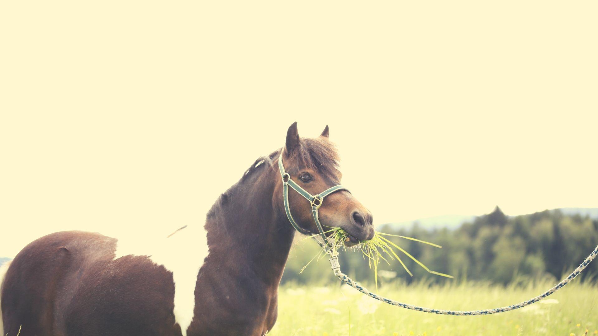 Warum du deine Pferdefütterung von einem Futterberater überprüfen lassen solltest