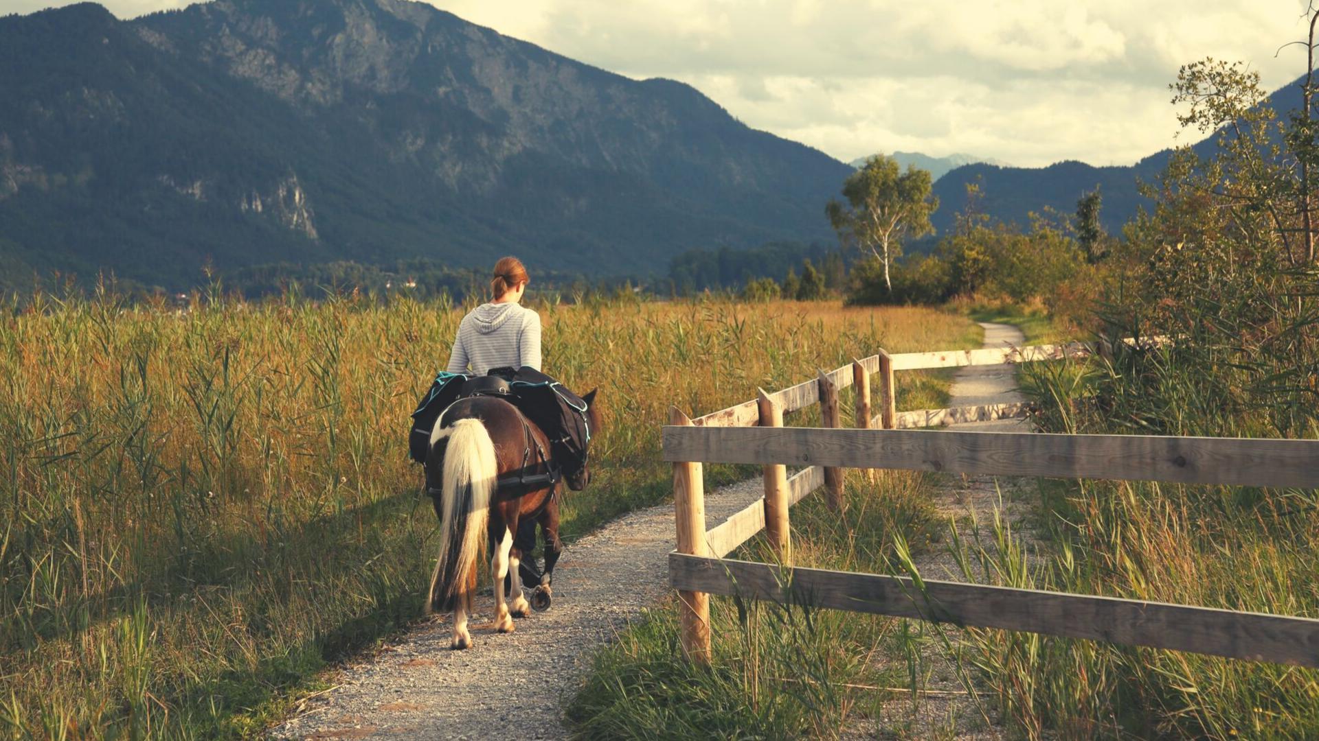 Warum wir unsere Pferde bewegen müssen!